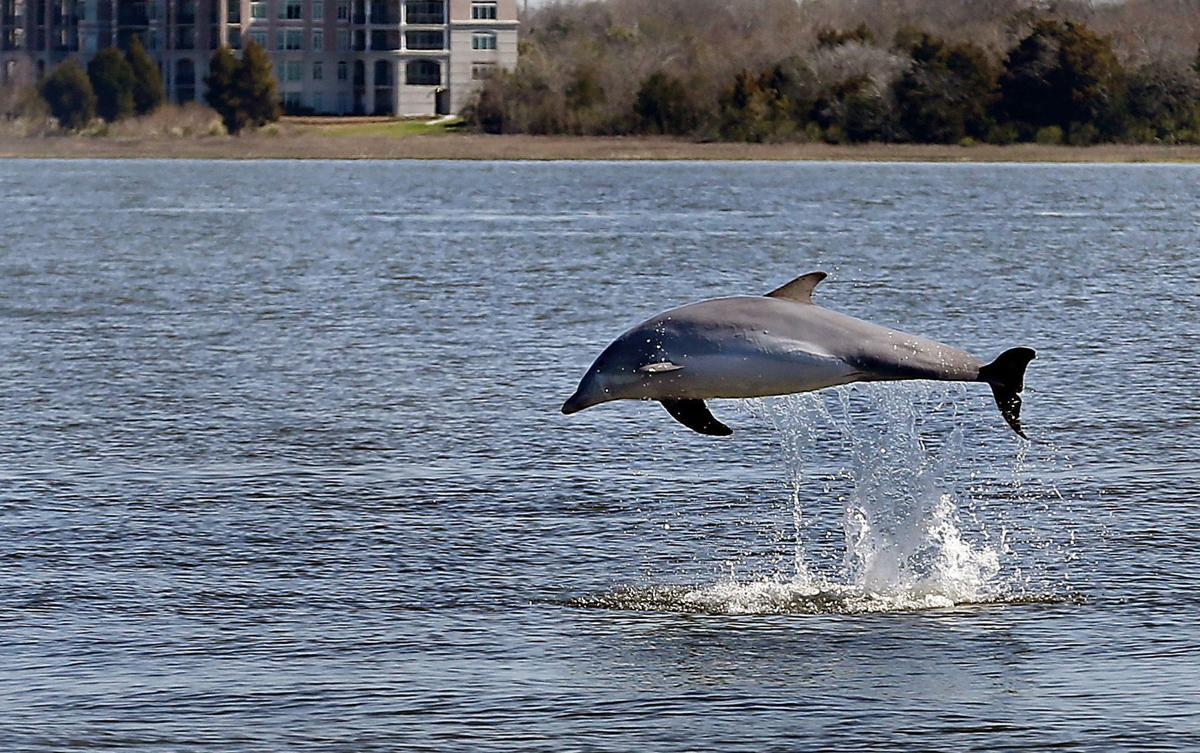 The story behind that awesome dolphin photo (copy)
