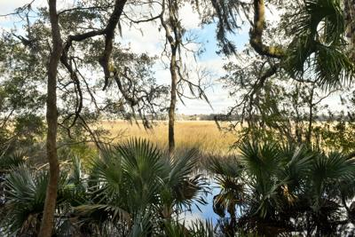 Historic SC tract to become first upper Ashley River plantation park