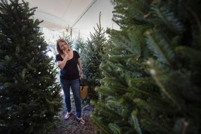 Fraser firs to be in limited supply on Christmas tree lots this year ...
