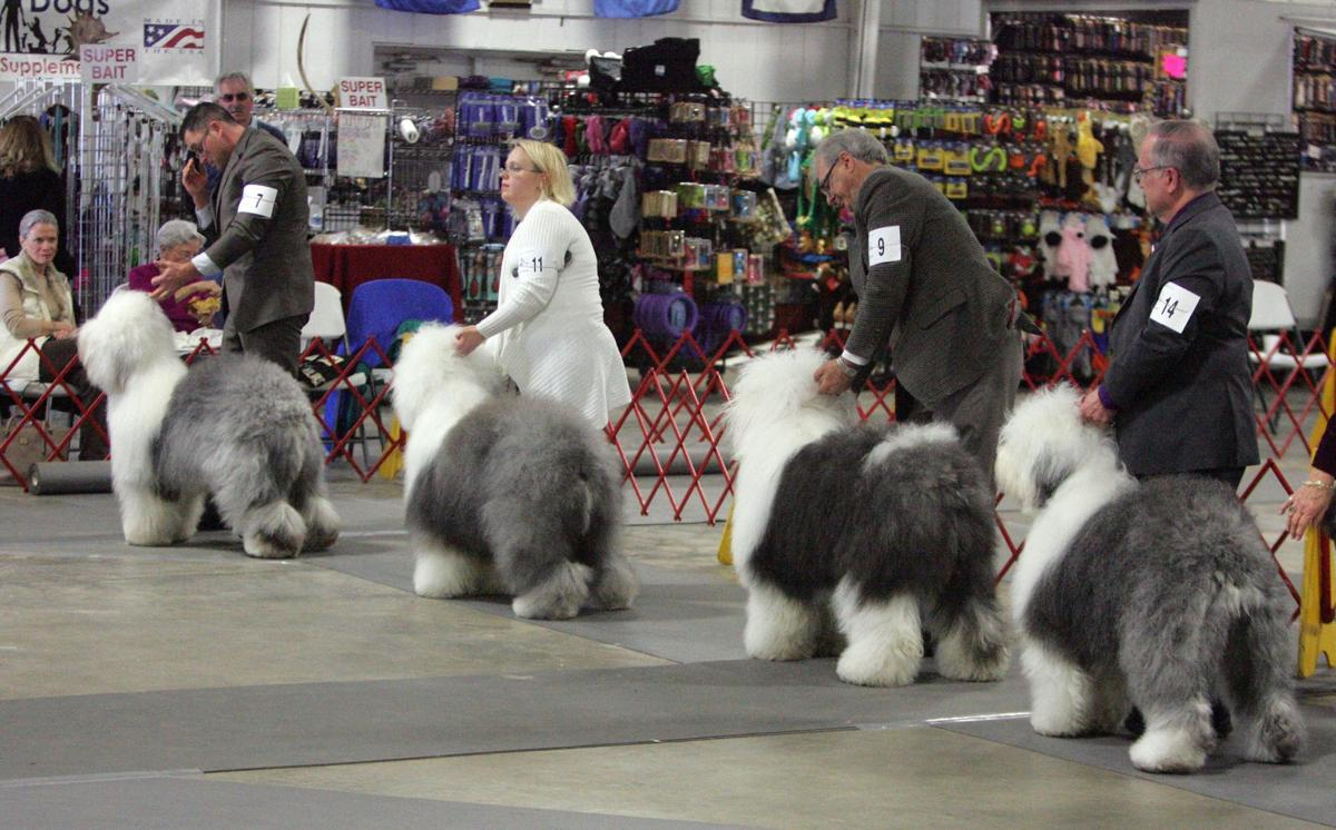 Charleston kennel clubs annual dog show begins saturday sports charleston kennel solutioingenieria Gallery