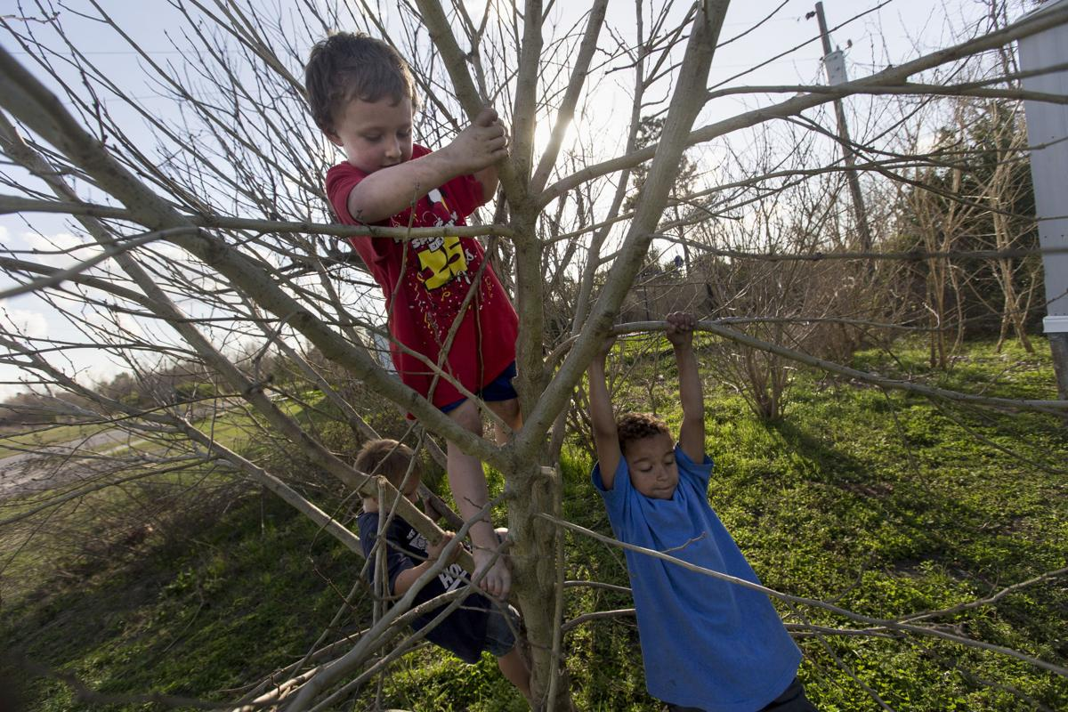 Kids climbing trees chapter 5.JPG