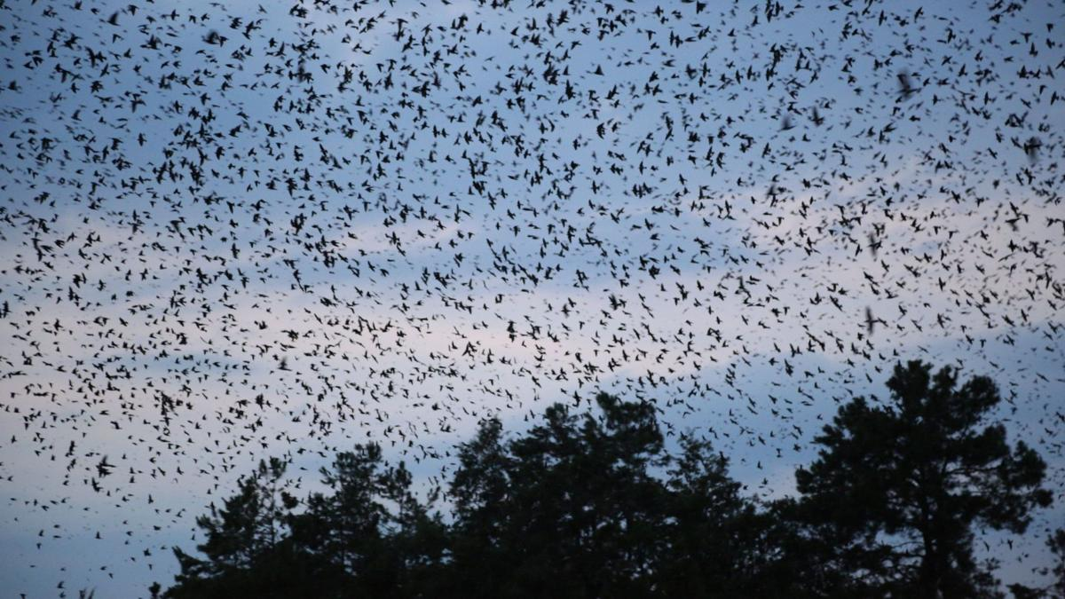 BC-SC--Purple Martin Move, ADV24,1359Purple martins' move leaves heads scratchingFOR RELEASE SUNDAY, AUGUST 24, 2014, AT 12:01 A.M. EDT.Adv24