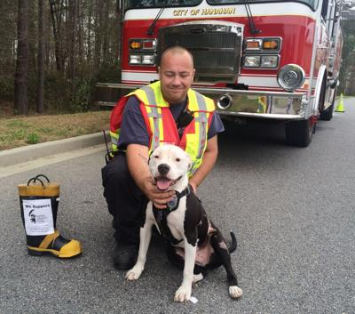 Survivor: Rescued Hanahan fire station dog has become world famous