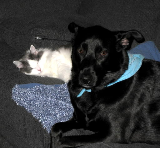 Family's rescue dog and cat best friends
