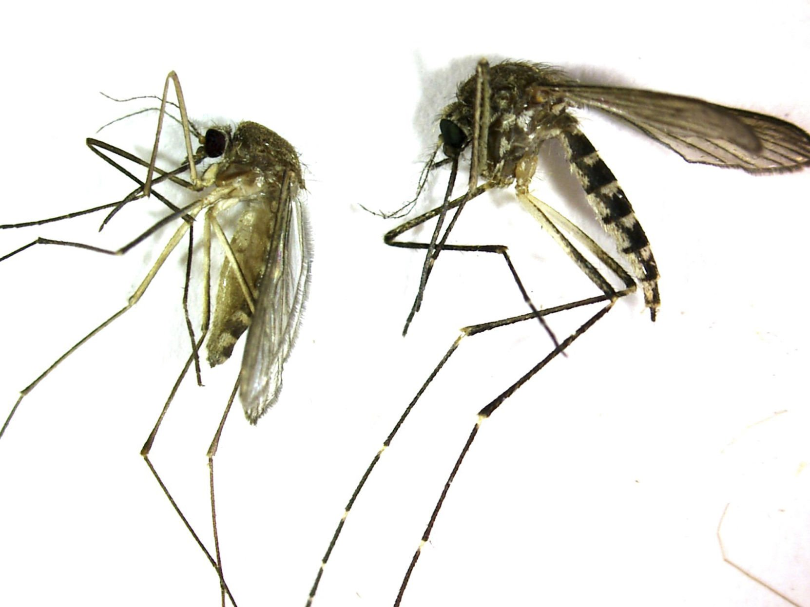 Case of West Nile virus confirmed in Rock Hill