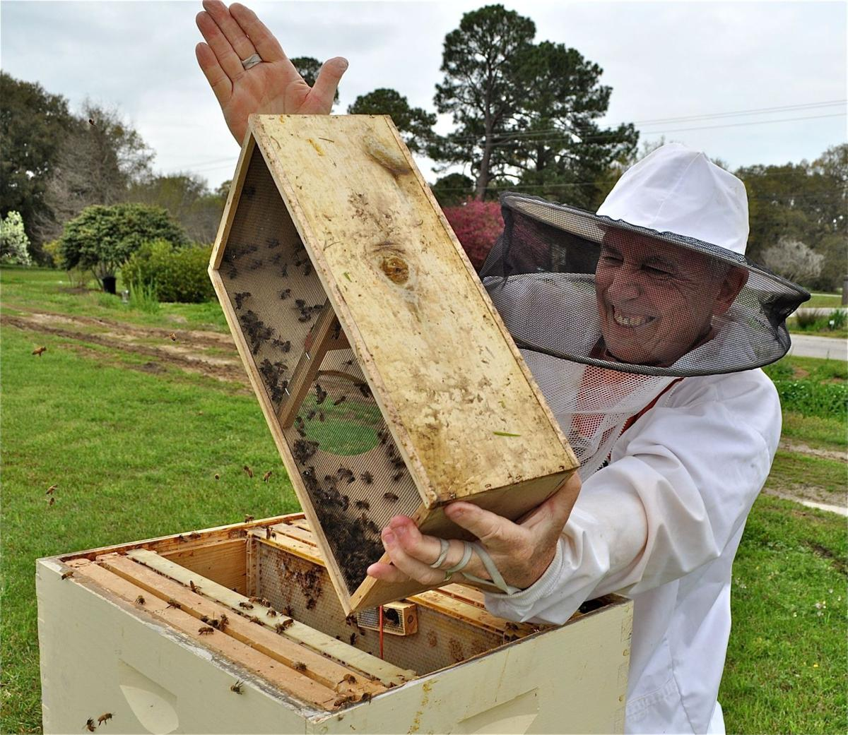 Abuzz about bees