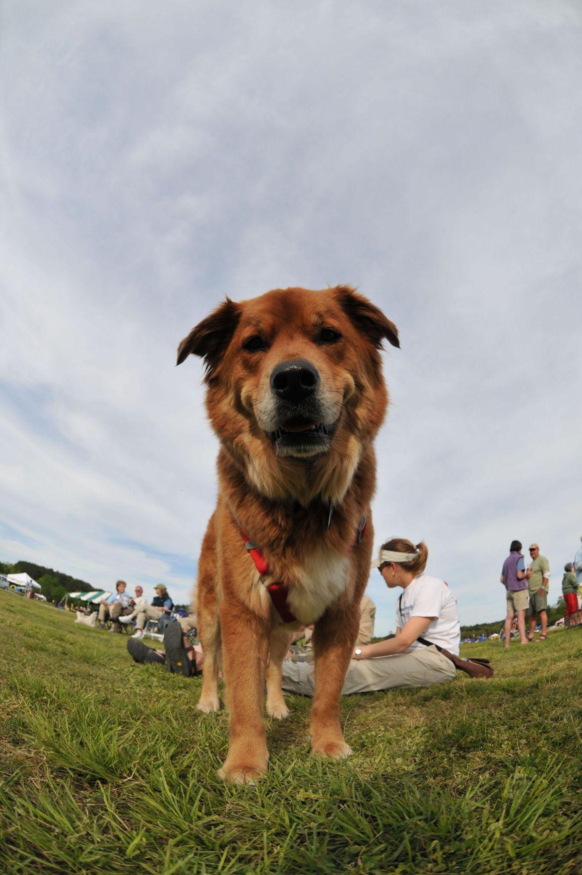 Dog-friendly summer series returns to James Island