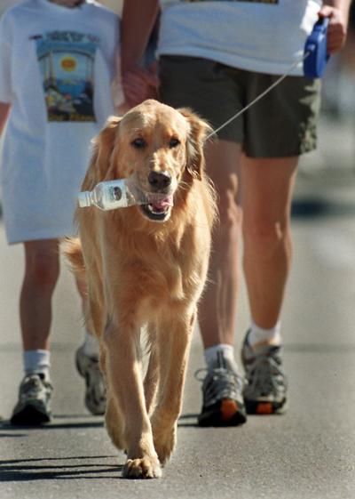 Run includes canine-friendly 1K