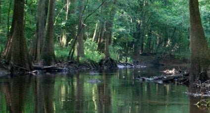 Congaree Park looks into new controls of wild hogs