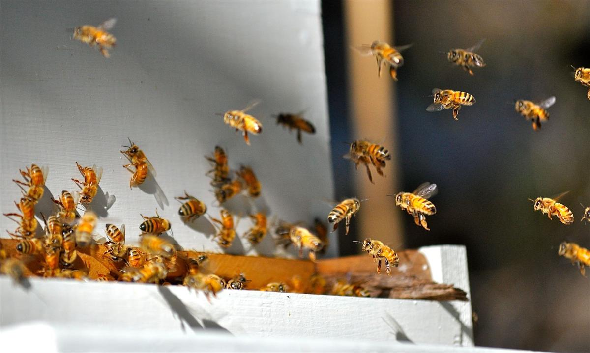 from new year u0027s resolution to backyard bee hive photo galleries