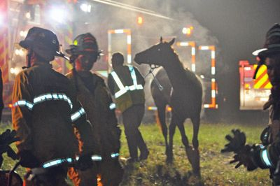 Rescuers free trapped horses after I-95 wreck