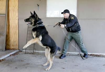 K-9 officers tackle annual training (copy)