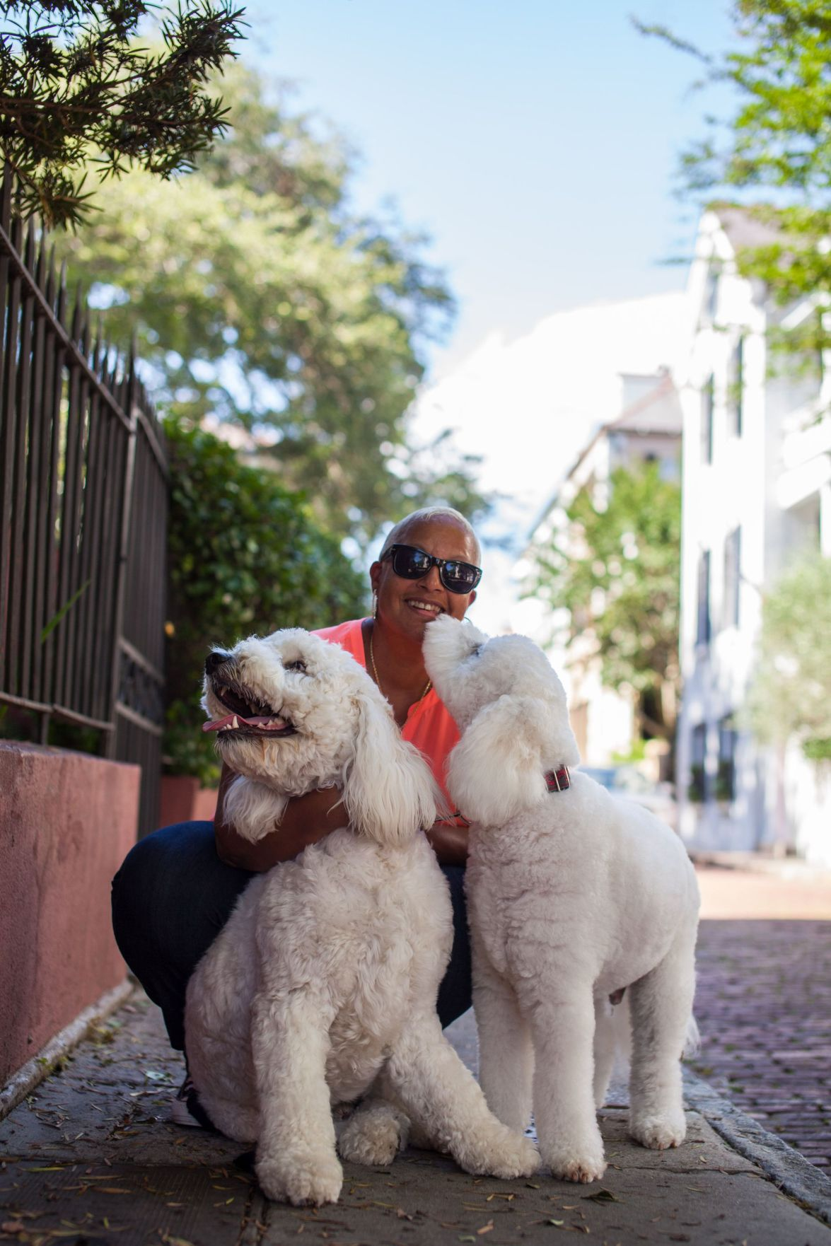 Blogger gets into the groove with goldendoodle chronicles