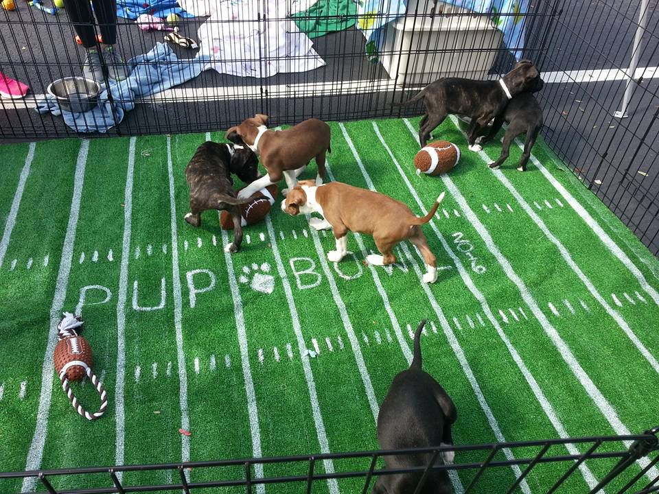Love a puppy bowl? See one live at Mount Pleasant Town Centre