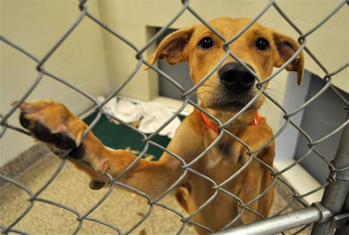 Shelter animals benefit from two weekend events