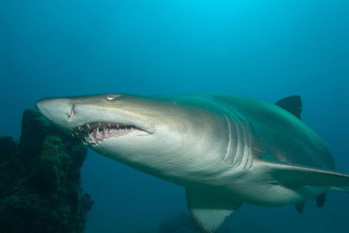 An ocean hacker with real teeth