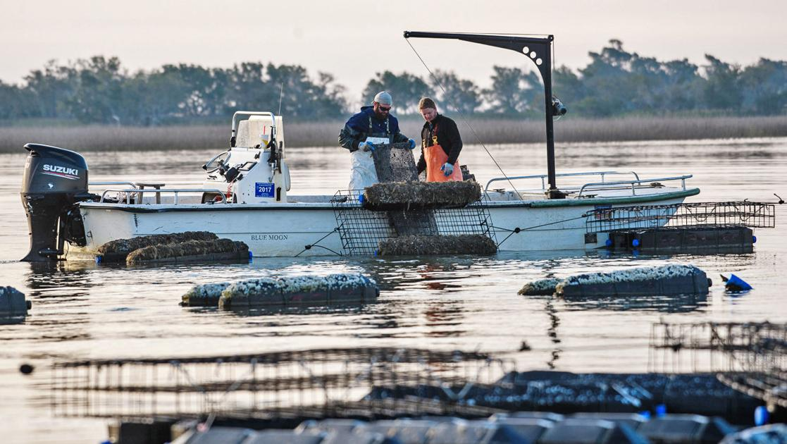 700 floating oyster cages pit growing SC industry against Edisto recreation