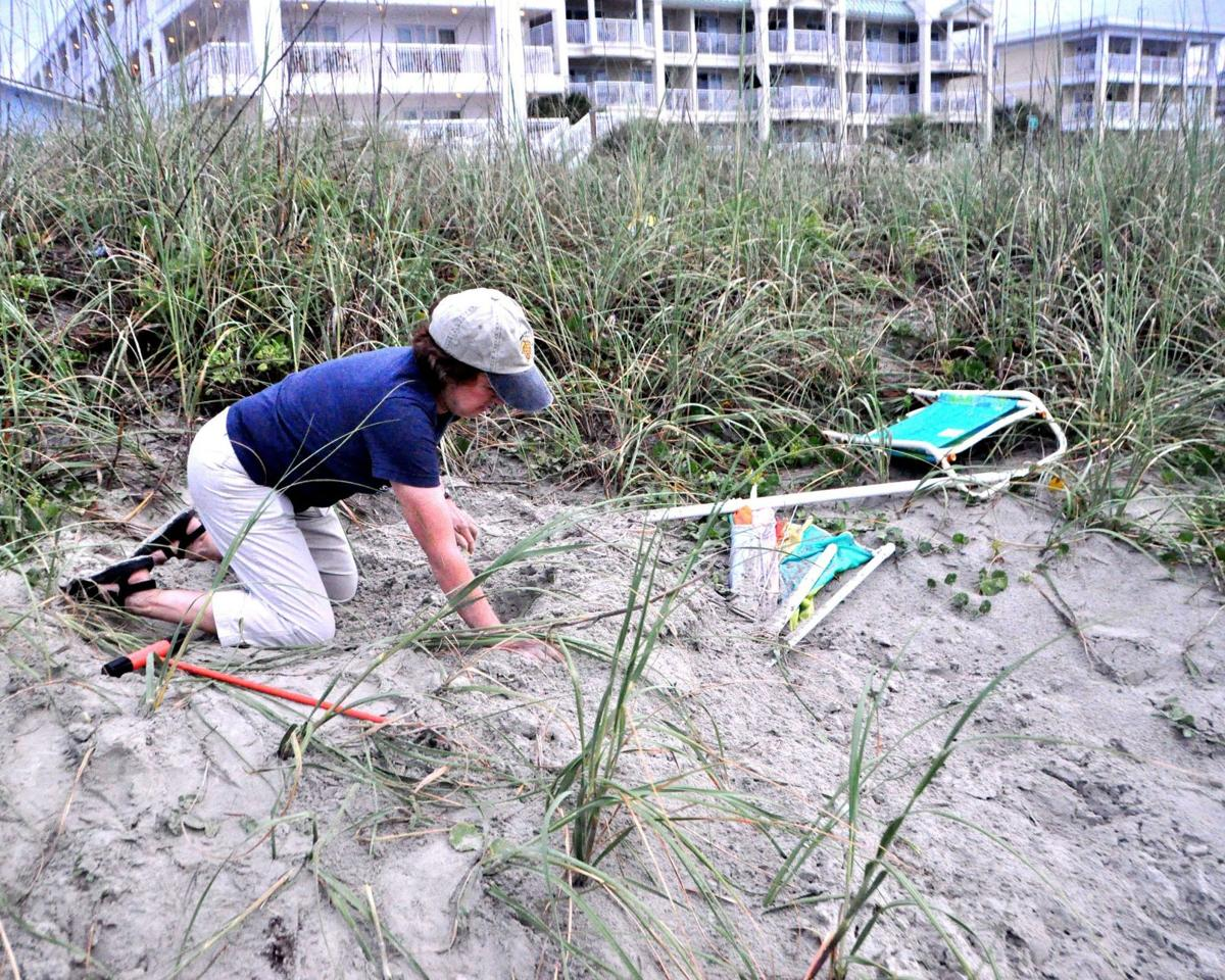 Volunteers relocate IOP sea turtle's endangered eggs