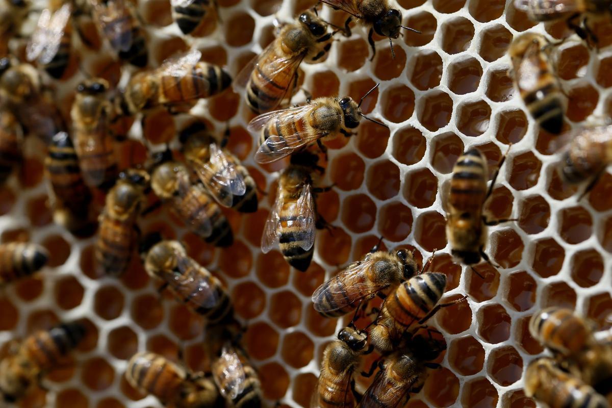 bee close up.jpg (copy)