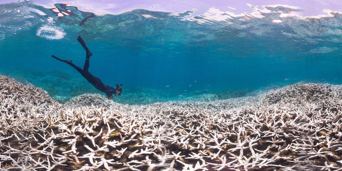 bleaching coral in American Samoa