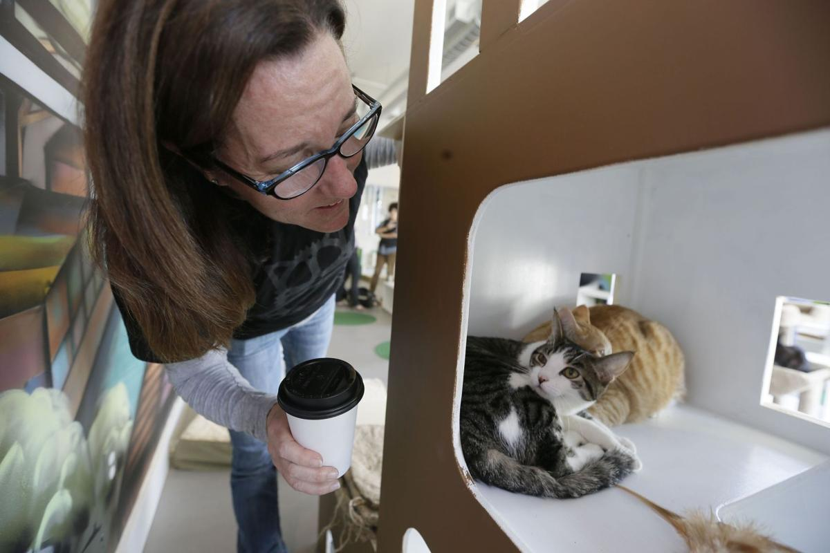 California cat cafe is catnip for feline fans (copy)