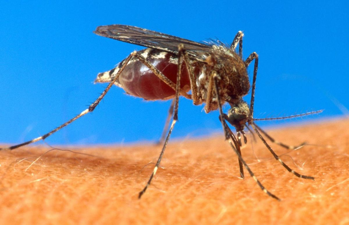 West Nile virus report spurs mosquito spraying
