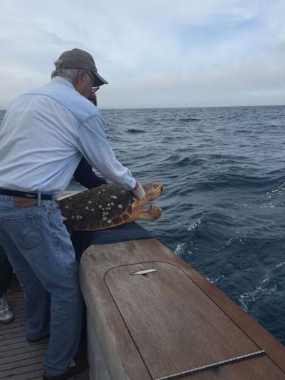 Loggerhead returned to deep ocean aboard sports boat