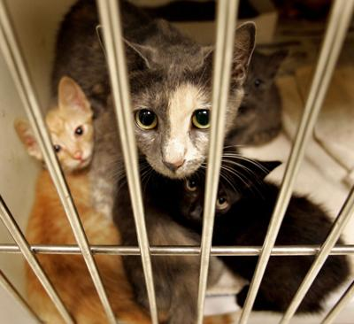 Dealing With Cats That Have Kidney Disease Features Postandcourier Com