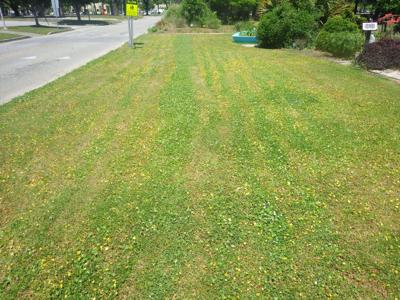 Timing, tips on killing weeds Care needed when using herbicides
