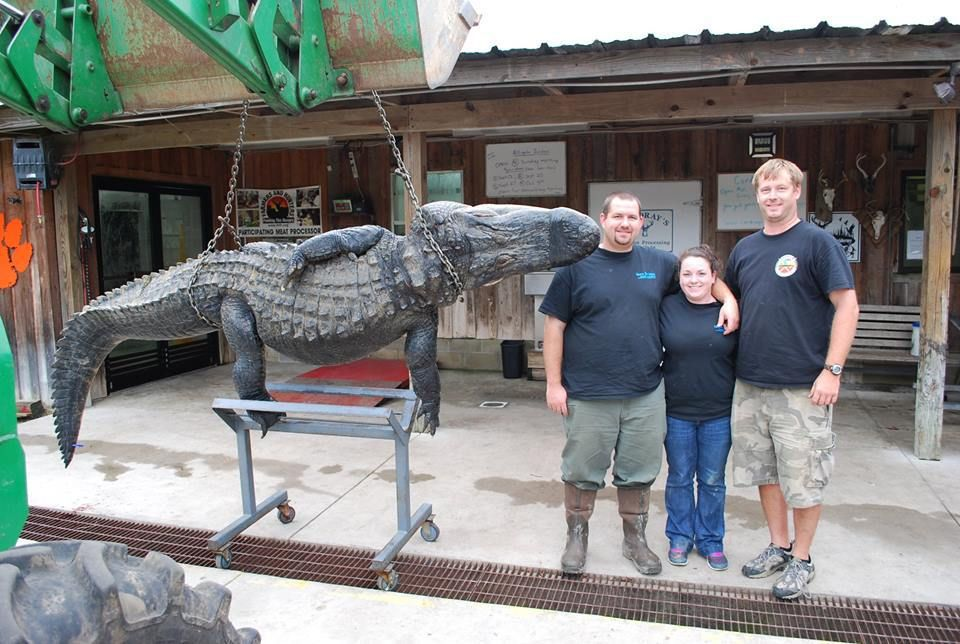 Gettin' gator; hunting couple brings back a monster