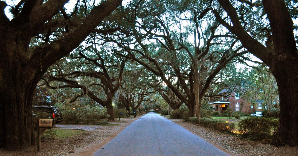 Tree Ordinances Help Municipalities Across South Carolina Protect