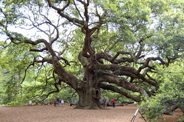 Development plans near Angel Oak to stand