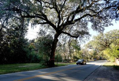 Johns Island live oak slated for 'execution' (copy)