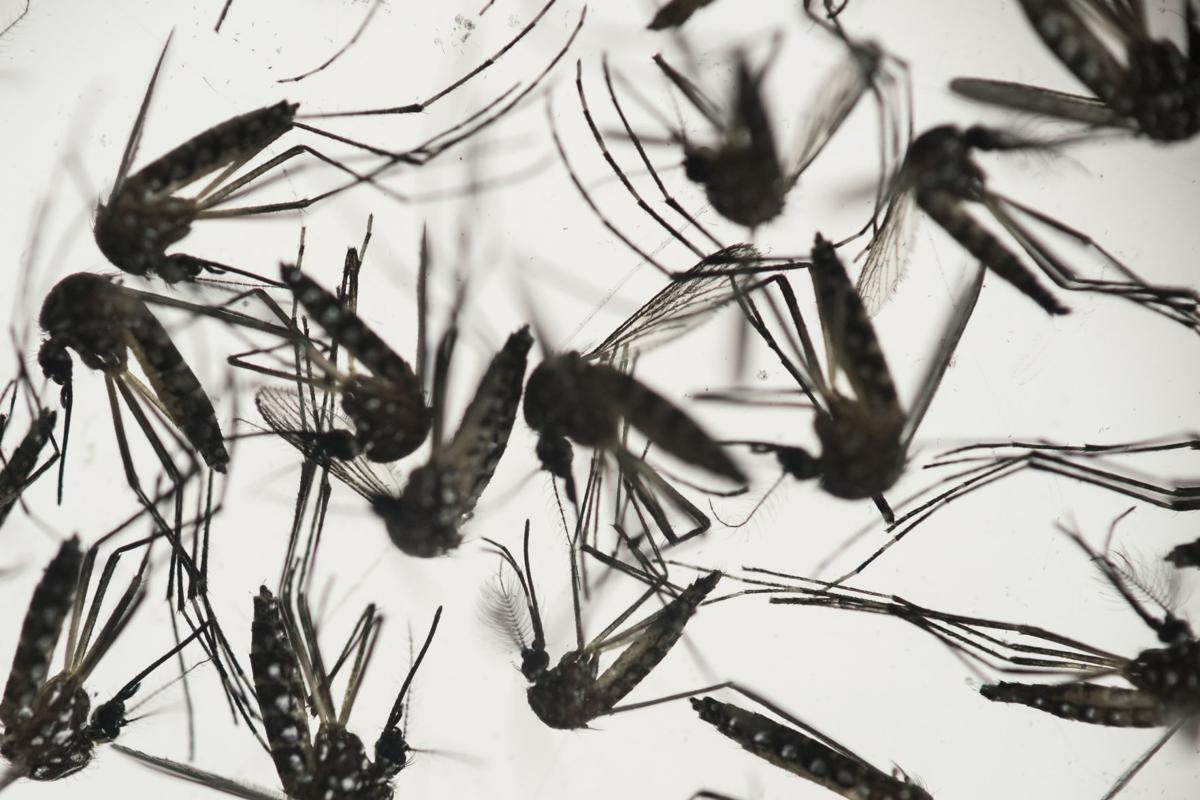 Local health experts believe S.C. mosquitoes will eventually spread Zika