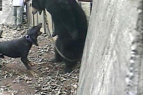 Group seeks to end bear baying