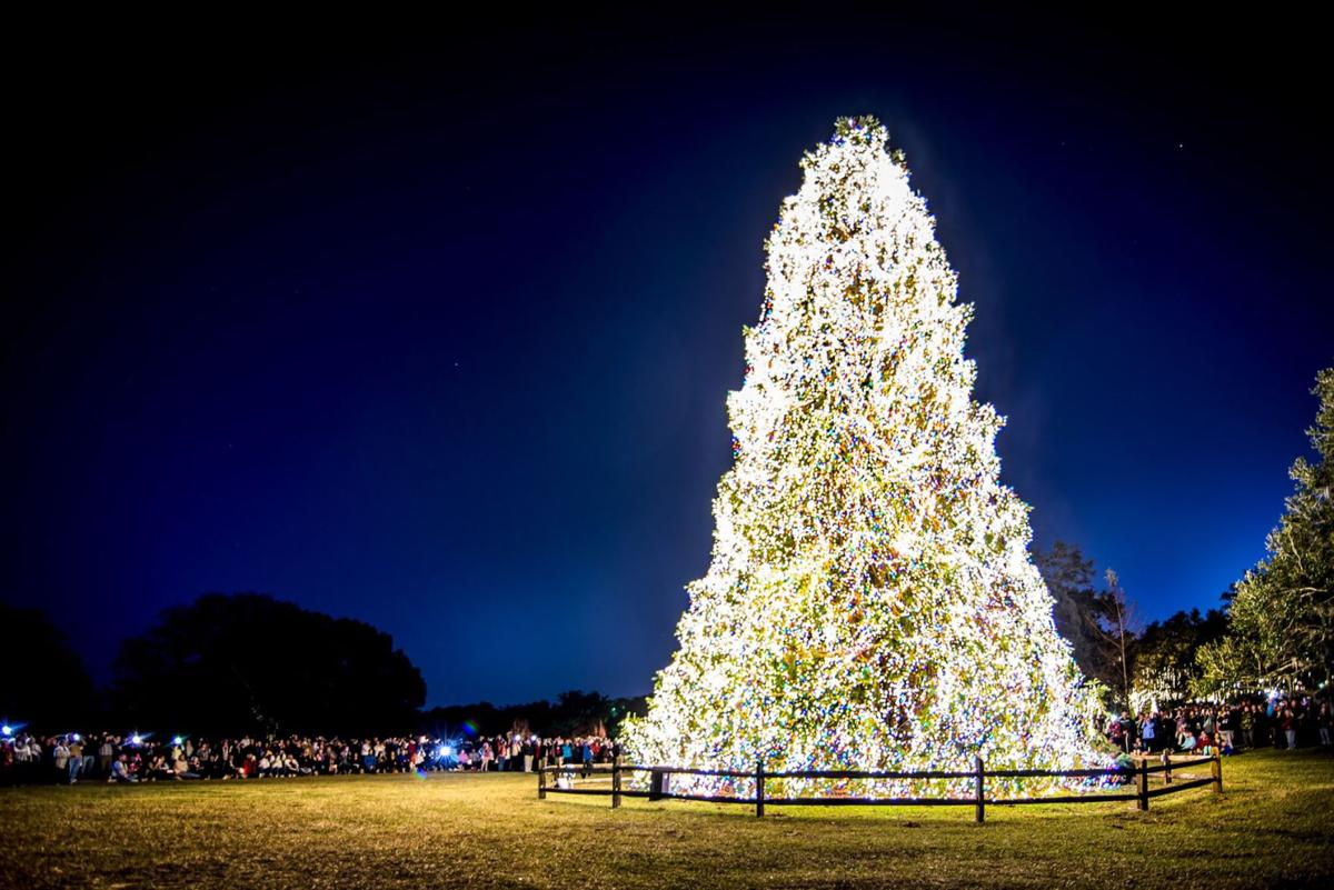 NOTC Holiday Tree.jpeg