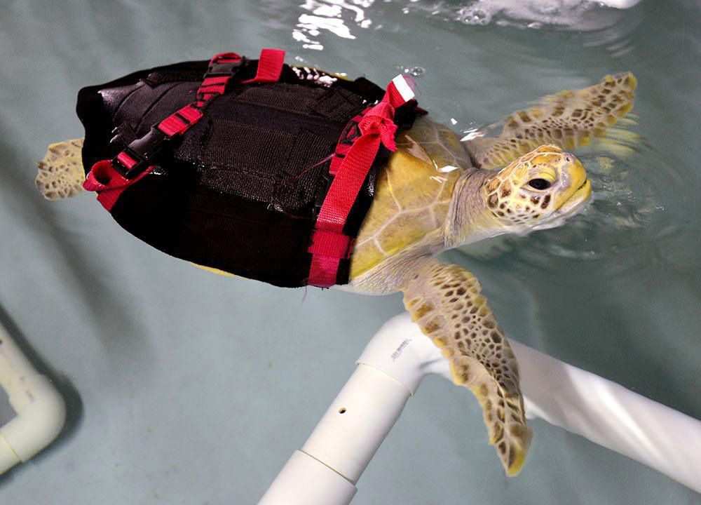 'Lucky' sea turtle to take to the skies