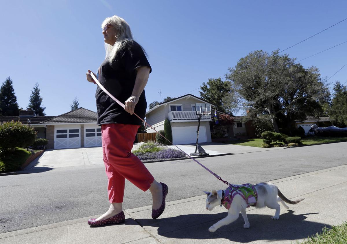 Cat walks may not be a stretch for some owners, pets