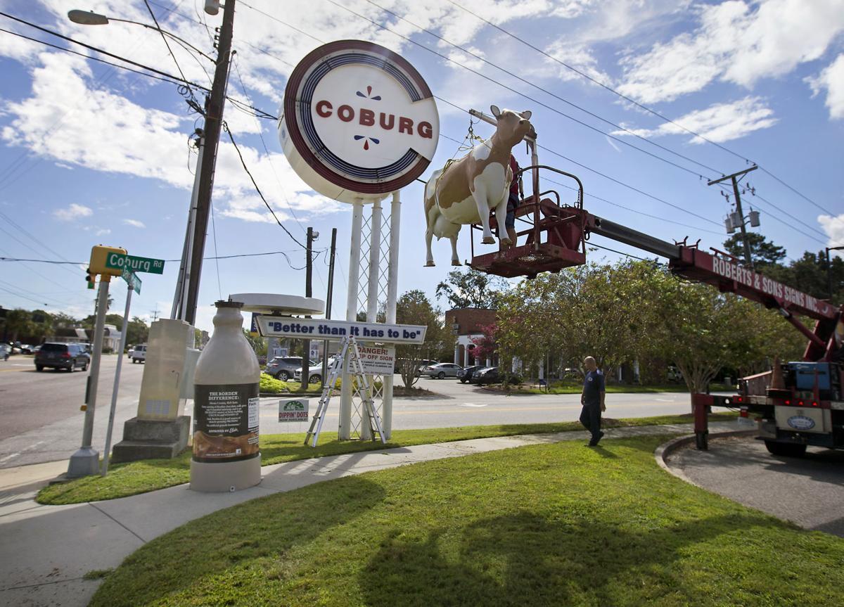 LP coburg cow 01.JPG