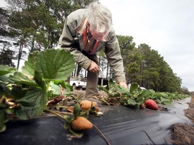 Cold snaps S.C. farms: 'It's going to be tough'