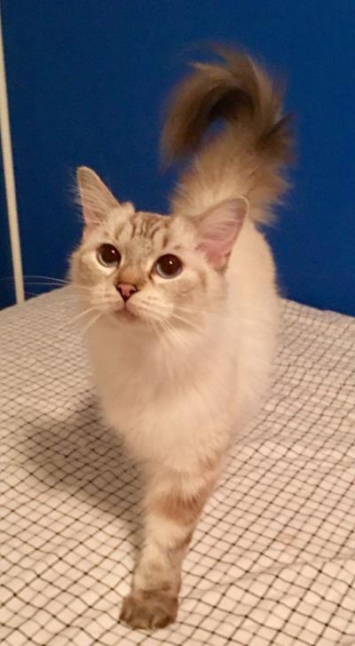 LAR adoptable cat (copy) (copy)