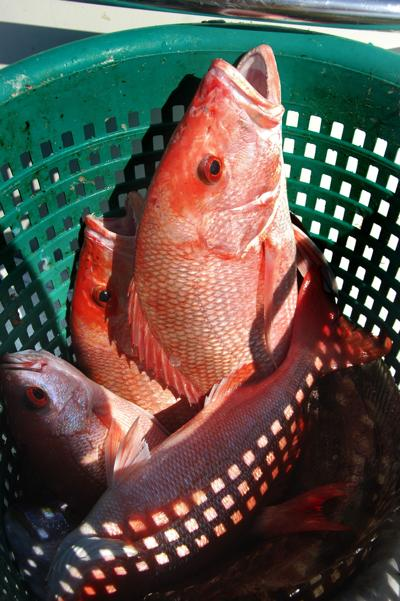 Red snapper season will remain closed in 2015 (copy)