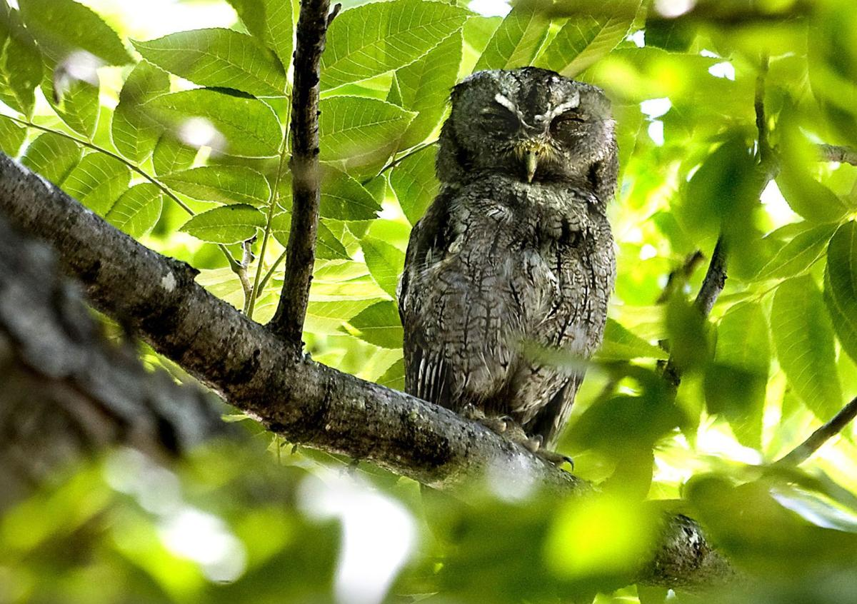 Foul owl on the prowl