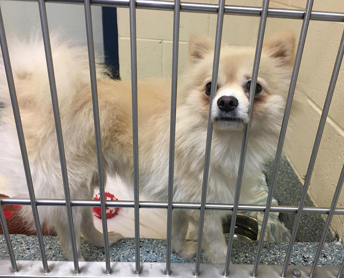 Spared from South Korean meat farm, dogs looking for new