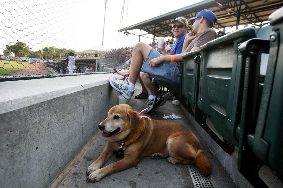 Sip craft beer, bring dogs to Riley Park for Bark for Your Brew event prior to RiverDogs' game