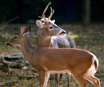Driving deer away Keep animals from dining on your garden, plants