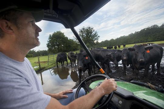 Livestock03.JPG