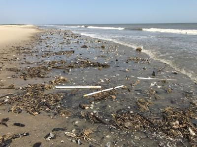 King tides and Hurricane Dorian ate away at SC's record turtle nesting season