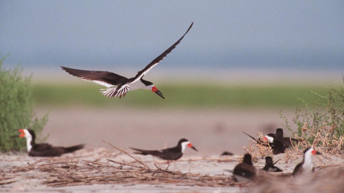 Mr. Audubon, Mr. Beach and 'Bird Banks'