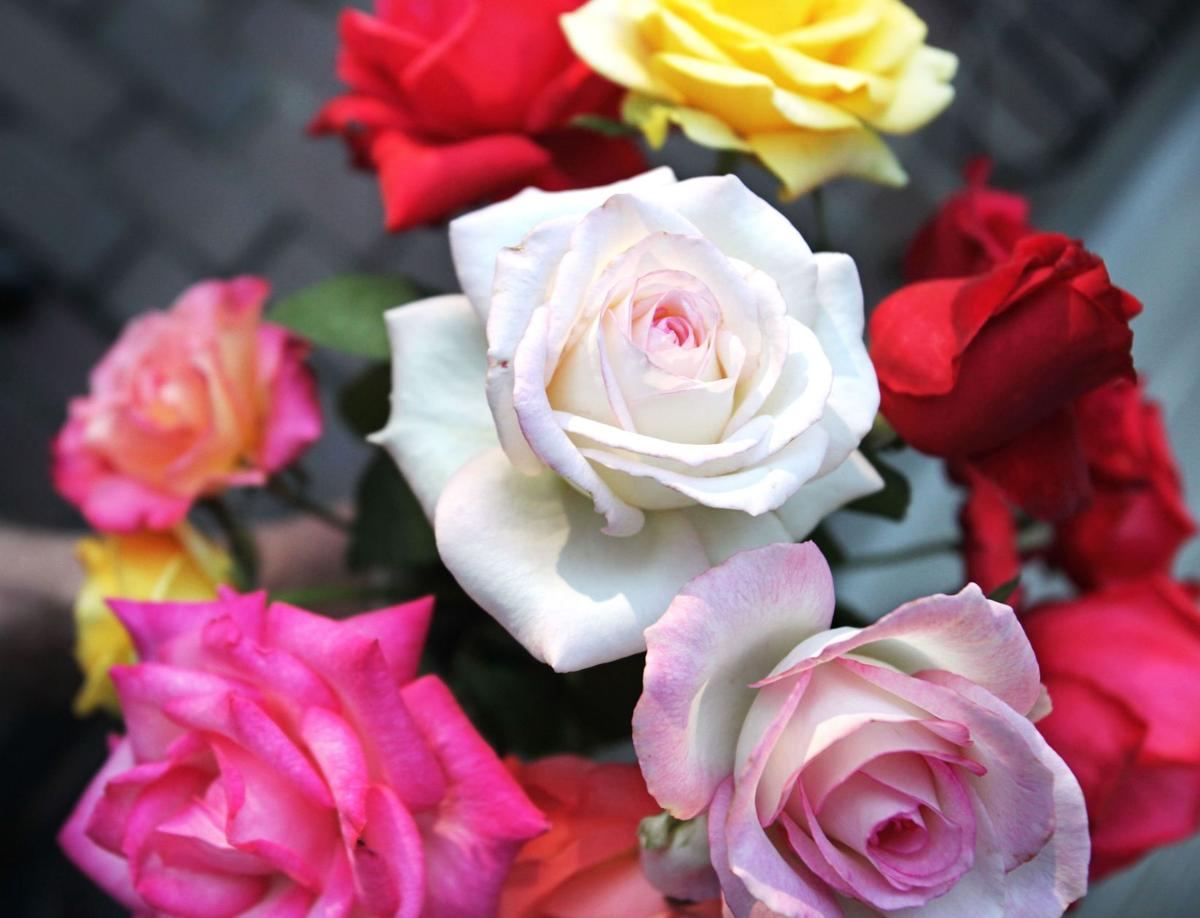 Late bloomers Fall roses are the best